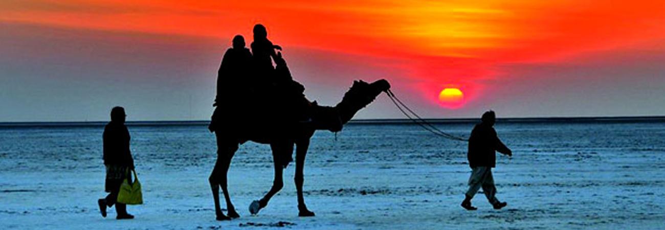 Camel Ride - Kutch Tour Guide