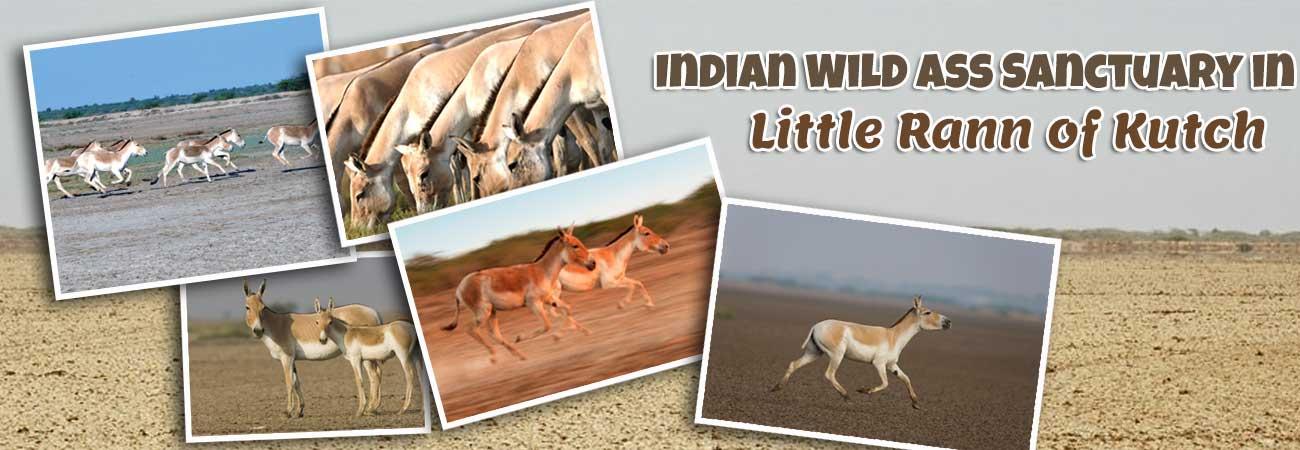 Indian_Wild_Ass_Sanctuary