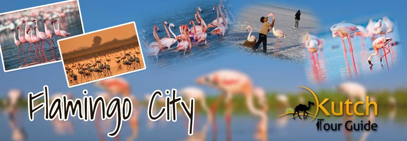 FLAMINGO_CITY_IN_KUTCH
