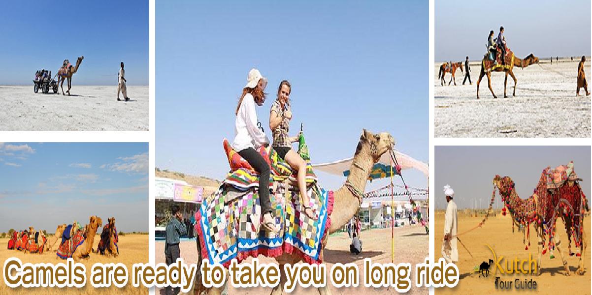 camel-ride-in-rann-of-kutch
