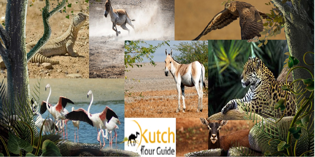 kutch_wild_life_rann_of_kutch